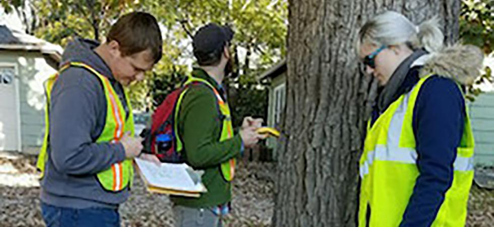 Tree Inventory in Des Moines